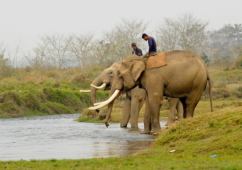 elephant bathingr