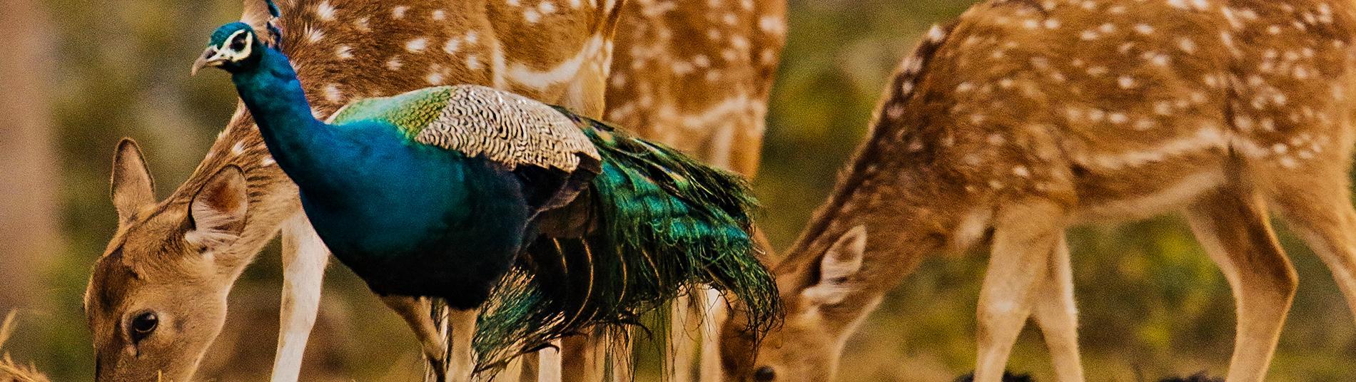 Bird Watchingr