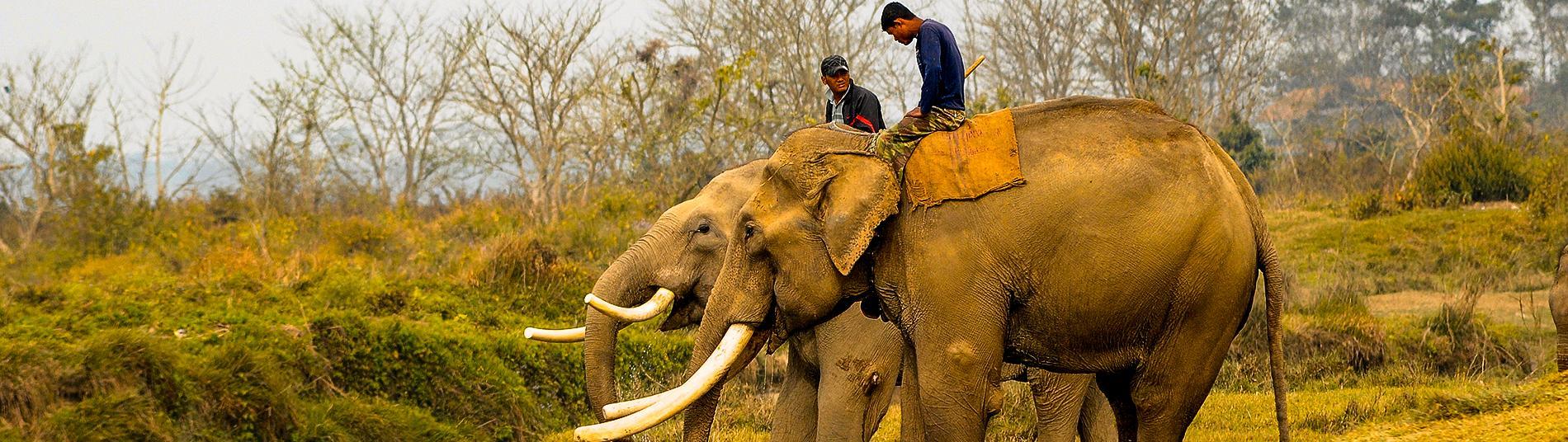 Elephant breeding centerr